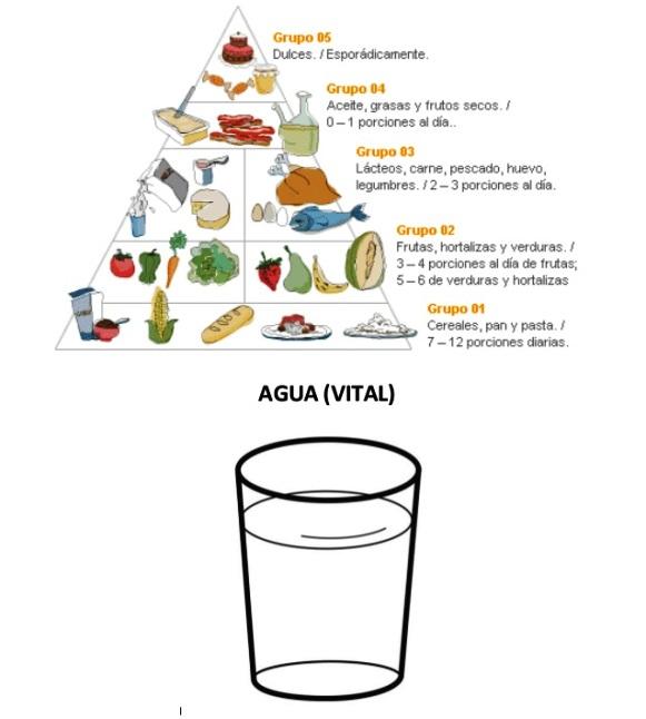 Importancia del agua en la pirámide alimenticia