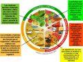 ¿Qué alimentos se encuentran en el plato del buen comer?