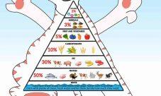Pirámide alimenticia de los gatos