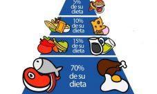 Pirámide alimenticia de los perros